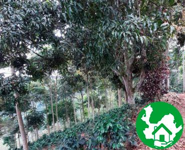 Finca Agroindustrial